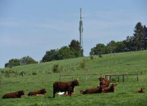 Handy orten ohne Zustimmung: GSM Funkmast auf Kuh-Weide