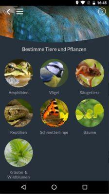 Tiere und Pflanzen erkennen mit der Naturblick App deutsch
